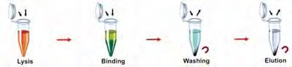 kit biologia molecular